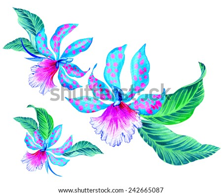 exotic orchid flower with tropical leaves, watercolor illustration of bouquets isolated on white. - stock photo