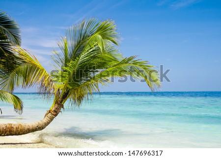 Exotic palm trees on white sand beach. Luxury resort. - stock photo