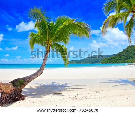 Exotic palm trees on white sand beach. Luxury resort. - stock photo
