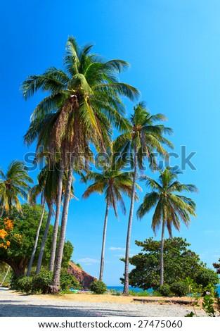 Exotic paradise - stock photo