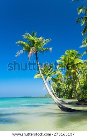 Exotic Paradise Serenity Shore  - stock photo