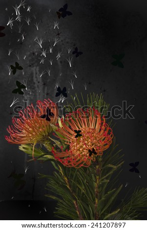 exotic protea  flower butterfly - stock photo