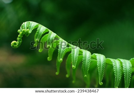 Exotic tropical ferns with shallow depth of field (dof) - stock photo