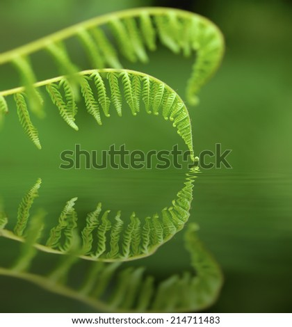 Exotic tropical ferns with shallow depth of field (dof)  - digital composite,  water reflection and ripple effects. - stock photo