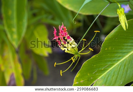 exotic tropical flower - stock photo