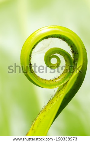 Exotic tropical shoots leaf with shallow depth of field (dof)  - stock photo