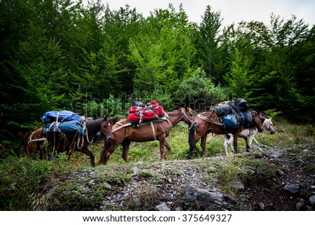 expedition into the mountains with horses and luggage - stock photo