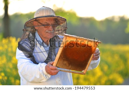 experienced senior apiarist working in the blooming rapeseed field - stock photo