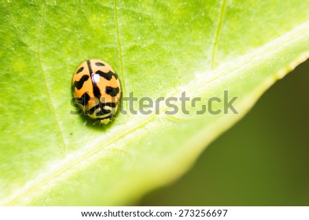 extra soft focus ladybug macro on green leaf - stock photo