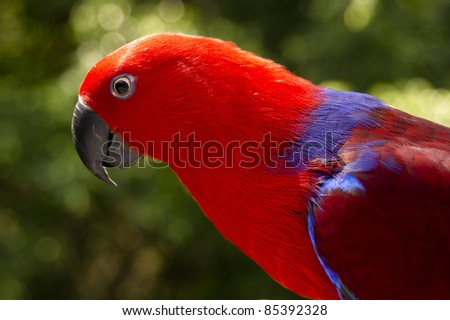 Extreme close up of a curious Red head Lory - parrot - stock photo