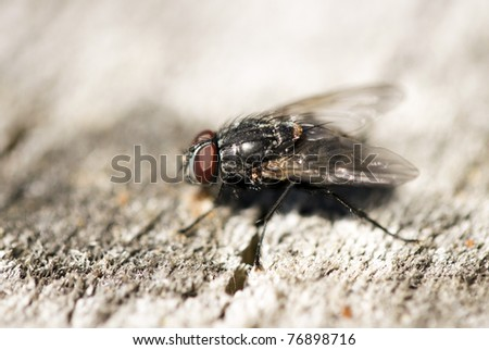 Extreme close-up of House fly - stock photo