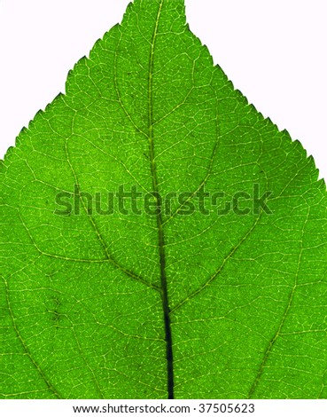 Extreme close-up of the green leaf texture - stock photo