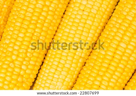 Extreme close up of yellow corn cobs - stock photo