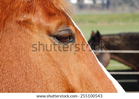 Extreme close up profile of a horse and her eye/Close of Horse Profile/Extreme close up profile of a horse and her eye - stock photo