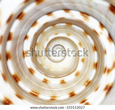 Extreme closeup of shells - stock photo