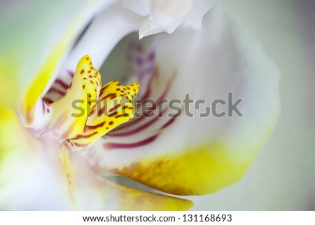 Extreme Macro: pink orchid flower used as background - stock photo