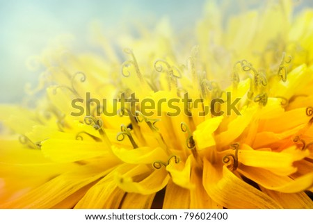 Extreme macro shot of dandelion pollen - stock photo