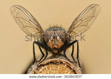 Extreme magnification - Fly liftoff - stock photo