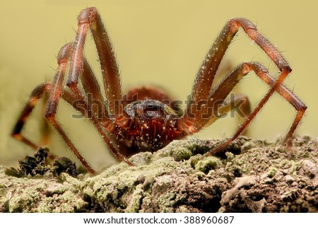 Extreme magnification - Spider on ground, front view - stock photo