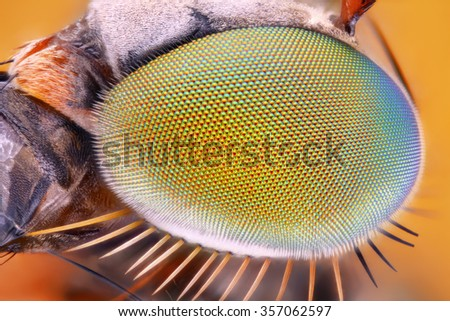 Extreme sharp and detailed study of metallic eye of unknown fly taken with 10x microscope objective stacked from many shots into one very sharp photo.  - stock photo