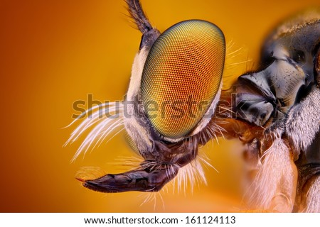 Extreme sharp and detailed view of Robber fly head  - stock photo