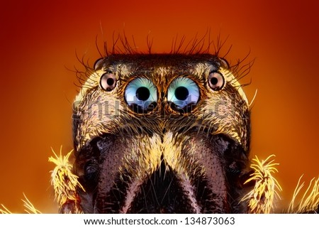 Extreme Sharp close up of Jumping Spider Face - stock photo