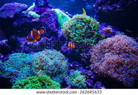 extremely bright and colorful tropical sea fish - stock photo