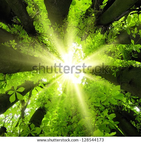 Eye-catching canopy scenery in the forest with the sun beautifully framed by lush trees - stock photo