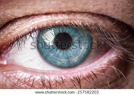 Eye macro. Macro image of human eye - stock photo