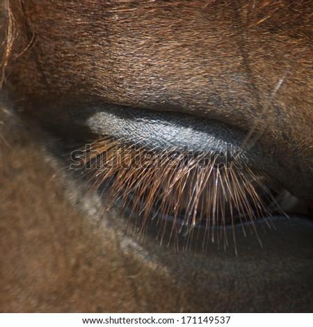 eye of a horse - stock photo