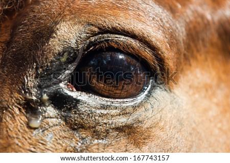 Eye of the Horse - stock photo