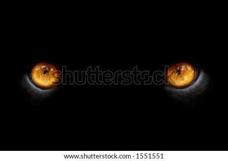 eyes of a panther in the dark - stock photo