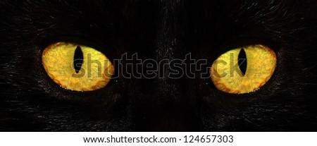 eyes of black cat in dark - stock photo
