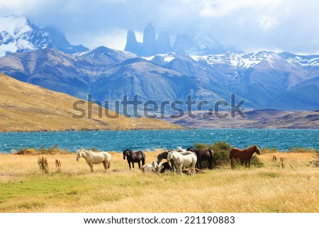 Fabulous lake in the mountains. Ashore are grazed herd of horses of different colors. South American Andes. Park Torres del Paine in Chile - stock photo