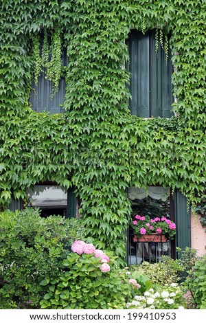 Facade completely overgrown by common ivy - stock photo
