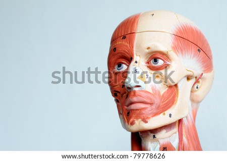 face human anatomy - stock photo