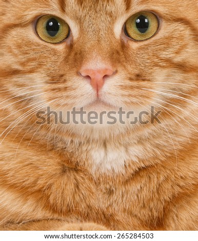 Face of a ginger cat looking at camera - stock photo