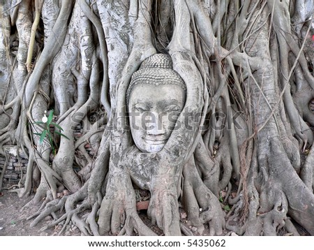 face of budda carved on tree, thailand - stock photo