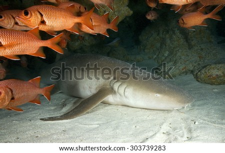FACE OF NURSE SHARK IN AN UNDERWATER CAVE - stock photo
