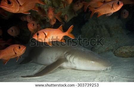 FACE OF NURSE SHARK SLEEPING IN AN UNDERWATER CAVE - stock photo