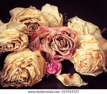 Faded roses on a black background close up. Vintage style effect - stock photo