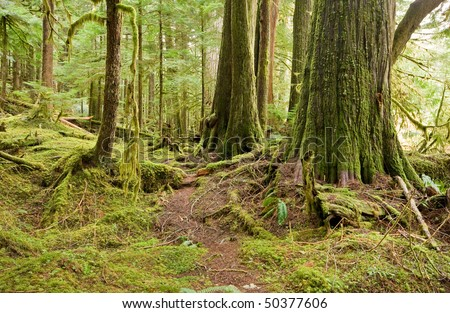 Faint Forest Trail - stock photo
