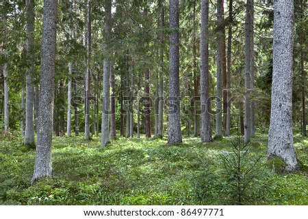 Fairy Forest. Natural Forest. - stock photo