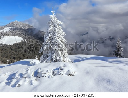 Fairy tale big christmas trees covered with white snow - stock photo