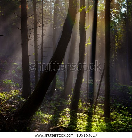 Fairy-tale forest- landscape, background. Tall trees, stumps of mixed forest, lit by the sun. - stock photo