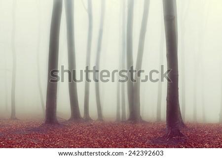 Fairytale foggy forest during autumn - stock photo
