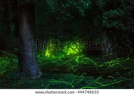 Fairytale scene fireflies night forest  - stock photo