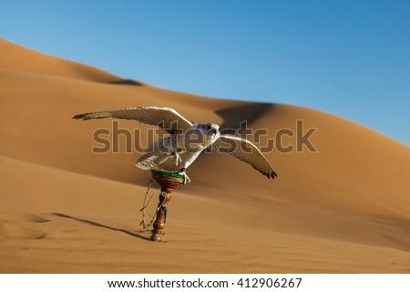 Falcon in desert, Dubai - stock photo