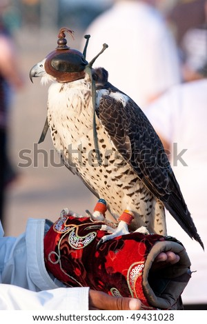 Falcon in the Desert - stock photo