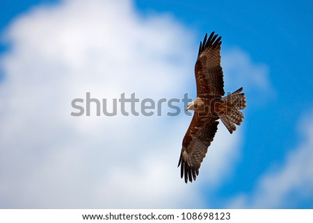 Falcon with outstretched wings under the cloudy blue sky - stock photo